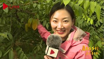 【北京蔡家洼村】快来!京郊百公里有片热带水果园直播时间:10月9日