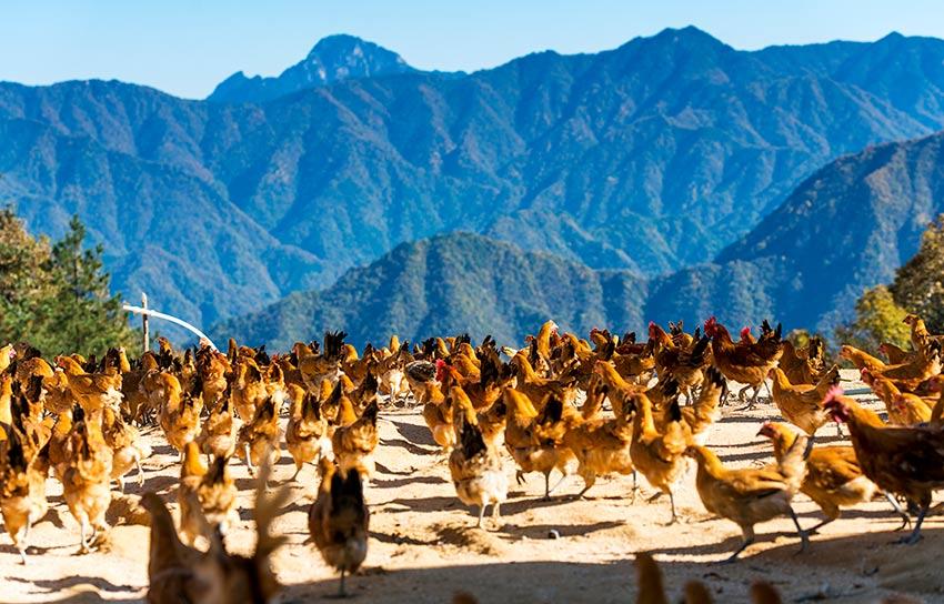全域乡村旅游、休闲生态农业大幅发展