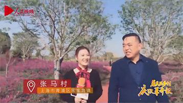【上海张马村】白墙黛瓦稻田飘香 乡村氧吧美丽张马直播时间:11月22日